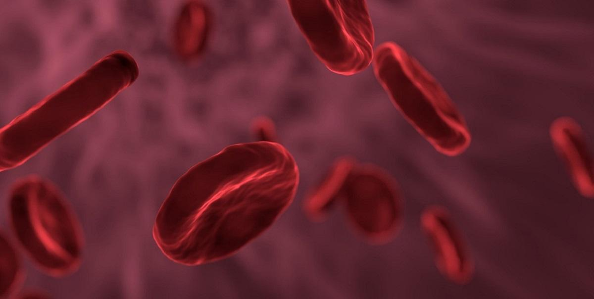 red-blood-cells-3188223_1280