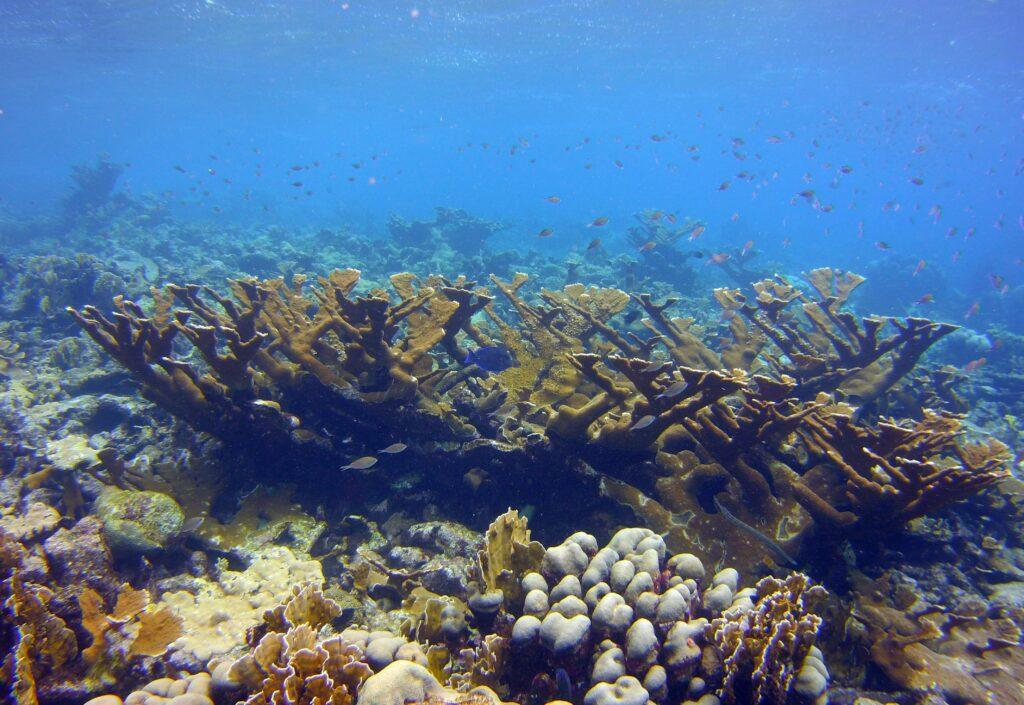 Evolutionary Insights: From Cancer to Corals